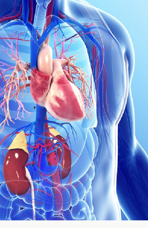 Sparsh-Website-Banners-SubSpeciality-Mobile_Cardiovascular___Thoracic_Surgery.jpg